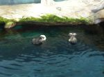 Not a great picture, but these sea otters were very cute.